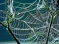 'Natural Network' von Dirk h. Wendt bei artflakes.com als Poster oder Kunstdruck $18.03