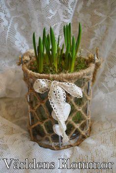 Vårplantering med pärlhyacint i glas kruka - lykta Världens Blommor Blomsterhandlare Landskrona Norra Långgatan 16 mittemot Polishuset 0418651159
