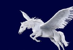 Pegasus ...