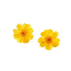 *REAL FLOWER* Paris Daisy Stud Earrings - Yellow / Gift Packaging