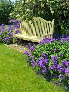 Purple flowers, garden bench