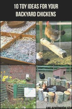 Toys for Your Backyard Chickens Let your chickens have some fun with these 10 inexpensive toy ideas!Let your chickens have some fun with these 10 inexpensive toy ideas! Raising Backyard Chickens, Keeping Chickens, Backyard Farming, Pet Chickens, Bantam Chickens, Diy Toys For Chickens, Plants For Chickens, Urban Chickens, Chicken Garden