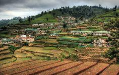 Tea plantations, Nuwara Eliya, Sri Lanka #SriLanka #NuwaraEliya #Tea #Plantation #HDR Sri Lanka, Plantation, Hdr, Vineyard, Sabbatical, Inspiration, Places, Landscapes, Outdoor