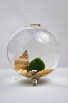 Marimo Moss Ball  Miniature Aquarium by PinkSerissa on Etsy, $20.00