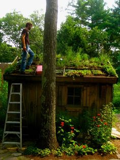 Living roof via Wilder #potting shed, #living roof