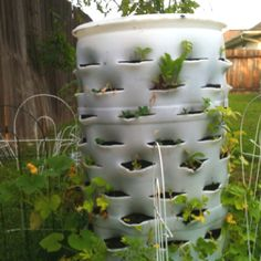 My Barrel Garden