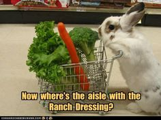 """""""Dont mind me - just shopping for some rabbit food. For eating with my bunny teeth."""" I thought this picture/quote was too cute - all credit to the website 'Rabbit Food For My Bunny Teeth' Baby Animals, Funny Animals, Cute Animals, Wild Animals, Animal Pictures, Cute Pictures, Amazing Pictures, Woodland Creatures, Cute Bunny"""