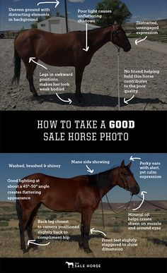 How to take a good picture of your sale horse. Follow our 5-step process for transforming any horse from pasture pet to crush-worthy.