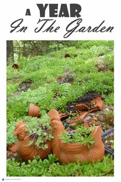 A Year in the Garden; a calendar of posts for every season. Succulent Landscaping, Succulent Gardening, Landscaping Tips, Succulents Garden, Vertical Garden Plants, Vertical Garden Design, Small Courtyard Gardens, Garden Projects, Garden Ideas