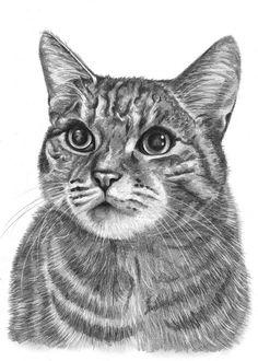 Gallery of Cat Drawings