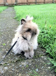 This fluffy adventurer.