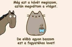 vicces Pusheen Cat, Wholesome Memes, Funny Moments, Funny Things, True Stories, Baby Animals, We Heart It, Haha, Funny Pictures