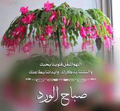 Good Morning Arabic, Good Morning Msg, Good Morning Flowers, Good Morning Messages, Good Morning Quotes, Morning Post, Morning Pictures, Morning Images, Bubbles Wallpaper