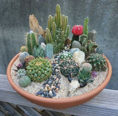 37 Lovely Small Cactus Ideas - The market in cactus house plants is booming and with very good reason. These prickly little guys are great fun, easy to keep and very attractive. Mini Cactus Garden, Cactus House Plants, Cactus Terrarium, Succulent Gardening, Cactus Decor, Cactus Flower, Cacti And Succulents, Planting Succulents, Flower Pots