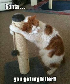 #cats #cattoys #catowners