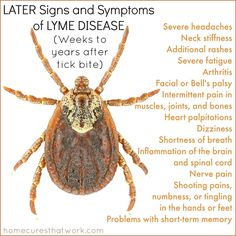 later signs and symptoms of lyme disease