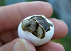 """20 Baby Animals Who Know How to Make Us Go, """"Aww!"""""""
