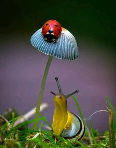 Ladybug (Ladybird) on toadstool or mushroom & Snail Beautiful Creatures, Animals Beautiful, Cute Animals, Beautiful Bugs, Amazing Nature, Cool Bugs, Bugs And Insects, Tier Fotos, Jolie Photo