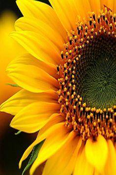 sunflower scenes | 4MiMovil.Comze.com - Fondos de Pantalla con Resolucion 640x360 gratis ...
