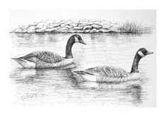 Canada Geese Graphite Pencil Drawing. Print from an by StudioFive2