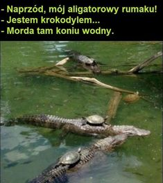 """The Turtle Calvary: Onward alligator steed! """"I'm a crocodile"""" Silence, water horse! Very Funny Memes, Wtf Funny, Funny Cute, Monday Humor Quotes, Friday Humor, Weekend Humor, Friend Zone, Funny Images, Funny Photos"""