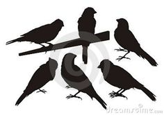 canary birds - Google Search