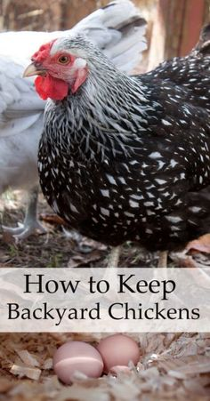 The benefits of keeping backyard chickens go beyond having fresh eggs in the morning. Chickens make great pets! But if you're going to commit to keeping backyard chickens, it's important to create the right environment and get yourself set up properly. Install a chicken coop that allows all of your chickens to be comfortable. Hang a feeder in the coop to keep the food clean and off the ground. A waterer helps guard against germs and algae. Consult eBay's guide to keeping chickens at home.