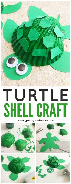Adorable Seashell Turtle Craft for Kids