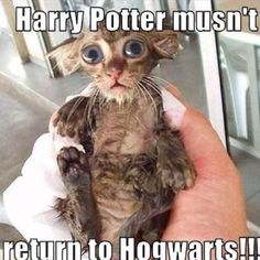 I may have a thing for cats that resemble dobby