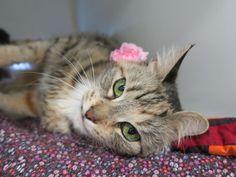 Lucky Lady 24153-1 ❤️SENIOR-15 YRS❤️ #adoptdontshop #seniorcat #lovingcat