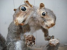 I know its not normal to find this amazing but look at it! Who wouldn't want a two headed victorian squirrel? Takes me back to spending my childhood weekends in the museum at Wollaton Hall looking at all the stuffed ducks on fake water and snakes sprawled over silk leaves. This has guest bedroom potential.