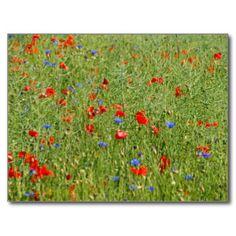 #Sommerfeld MIT roten und blauen #Blumen #Postkarte  50% auf #Karten, #Einladungen & #Aufkleber + 20.16% auf alles andere  |  #GUTSCHEINCODE: CARDSANDMORE