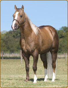 Skip's Challenger (c)Percheron Horse Association of ...
