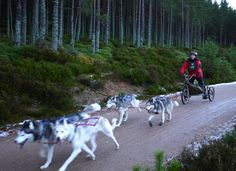 Hitch a ride on a dog sled. | 21 Life-Changing Things Everyone Must Do In Scotland