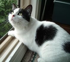 My cat Ruby. Gloria, Washington, Michigan. 6/5/14.