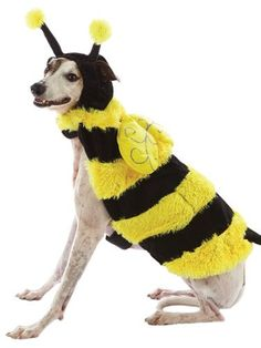 BUMBLE BEE DOG COSTUME Dress Up Outfit Pet Halloween « Pet Advertisings