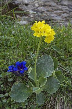 Alpine Flowers, Gladiolus, Wild Flowers, Spring, Green, Flower Arrangements, Portion Plate, Plant Pots, Plants