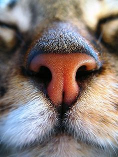 Big cat nose.  Go to www.YourTravelVideos.com or just click on photo for home videos and much more on sites like this.