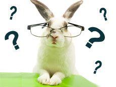 FAQ for Bunnies