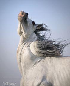 hmmm.... twister-horse by Vikarus.deviantart.com