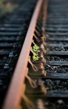 È primavera... dopo la pioggia il verde nasce ovunque... anche nei binari di un treno che è andato via... cresci verde e diventa forte...