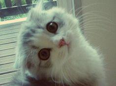 Cute little kitten love her