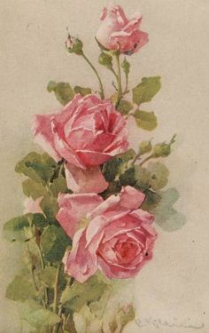 Catherine Klein postcard with pink roses