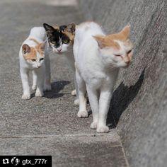 Repost @gtx_777r  以下の文章はフォトグラファー genta sueyoshiさんの Facebookページの投稿から 勝手ながら引用させていただいております。  m.facebook.com/gtx_777r https://instagram.com/gtx_777r/  もう15年近く猫の写真を撮らせていただいている場所が、いくつかあります。 その一つ、野良猫が多いことで有名な場所が今年、とある雑誌に特集されました。誌面にはご丁寧に「猫に会える地図」なんてものもくっついていました。  撮影を担当した某写真家曰く「世話をしているお店やさん(一軒)の許可を得たから僕は悪くない」ということでしたが、それで勝手に紹介されてしまった他のお店は、現実問題として頭を抱えています。  何故なら無許可で紹介されたお店の周辺や前述の地図に載っている場所で、捨て猫が例年の倍以上に増えているから。雑誌と捨て猫の因果関係は不確かですが、雑誌の発売以降、目立って増え、9月から10月で20匹ほど増えました。もうこれ以上増えたら面倒が見きれない…そんな悲鳴、そして虐待と思しき事案も。…