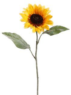 sunflower black singles Sunflower – – – 29 (6 wo) 151 (4 wo) veröffentlichung: 31  hit singles volume 2 – complete uk chart data from 1952-2010, virgin books 2010,.