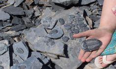 A New Dig, Inc., Premium Utah Trilobite Hunting