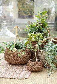 Plantas en cestas. Conjunto