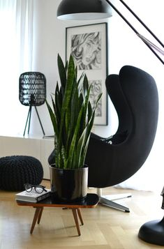 look! pimp your room: Pflanze des Monats: Bogenhanf #pflanzenfreude