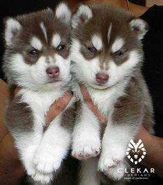 Awwww!!!  ~ WANT BOTH ~