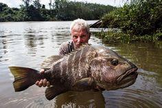 riemenfisch fluss monster